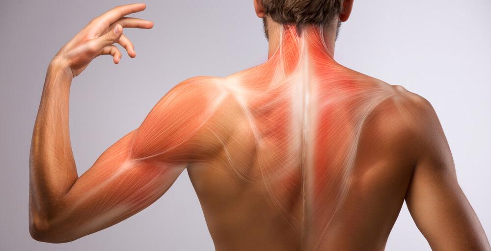fascias de la espalda