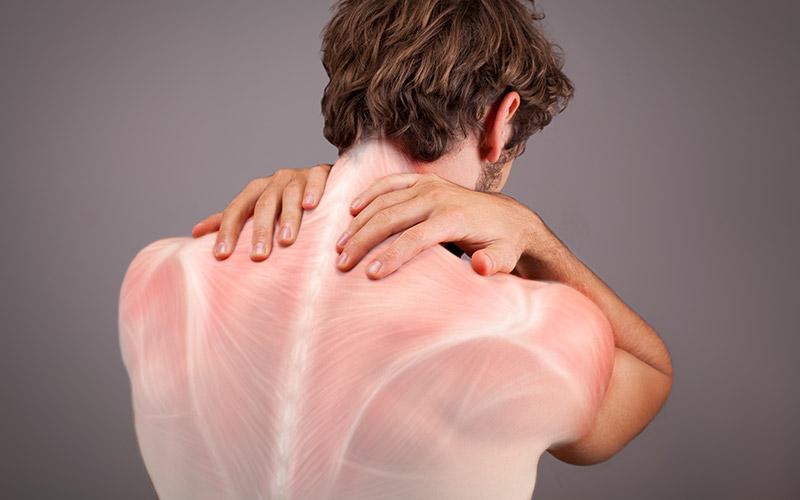 fascias del cuerpo